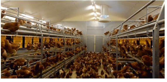 Avipole Formation : Devenir Conseiller dans le secteur avicole
