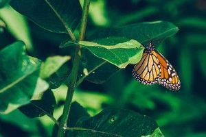 Biodiversité : des métiers pour sauver la cathédrale du vivant