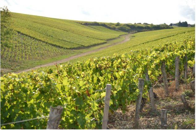 De réelles opportunités pour évoluer dans sa carrière vitivinicole