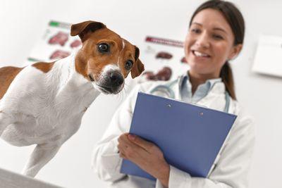 Devenir auxiliaire vétérinaire