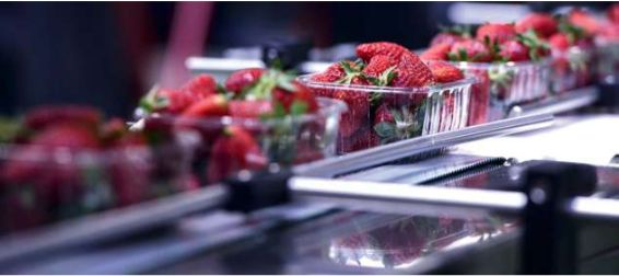 FRUITS ET LÉGUMES : UN SECTEUR EN CONSTANTE INNOVATION