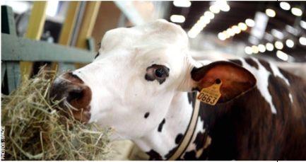 Interbev, porte-parole de la filière bétail et viande