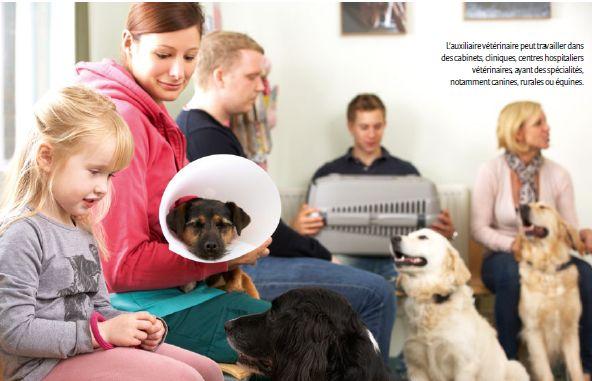 Les dispositifs pour devenir auxiliaire vétérinaire