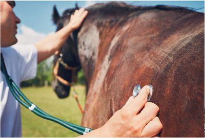 Médecine vétérinaire : des débouchés variés