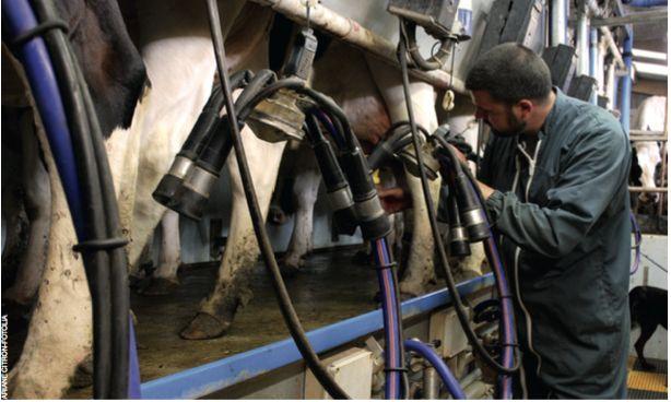 Métiers du lait : une diversité à faire connaître