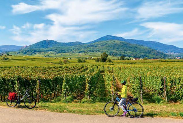 Travailler, se former dans le tourisme agricole et vert