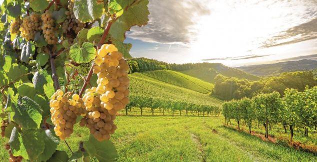 Vigneron : « Un métier agricole de plus en plus TOURNÉ VERS LES SERVICES »